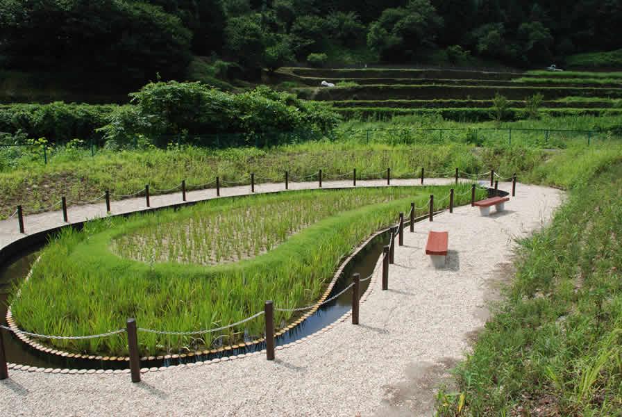 藤波ダム(敷き砂利)