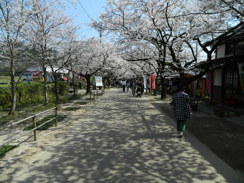 福岡県朝倉市秋月(杉の馬場)(脱色アスファルト舗装)